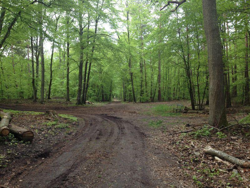 Bois de chauffage Bois de chauffage Bois de chauffage, abattage arbre sur la Seine et Marne  # Bois De Chauffage Ouest Lyonnais