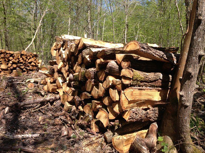 Bois de chauffage Bois de chauffage Bois de chauffage, abattage arbre sur la Seine et Marne  # Bois De Chauffage Avignon