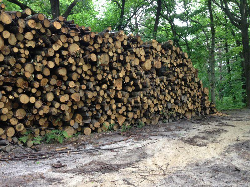 Bois de chauffage Bois de chauffage Bois de chauffage, abattage arbre sur la Seine et Marne  # Bois De Chauffage Angers